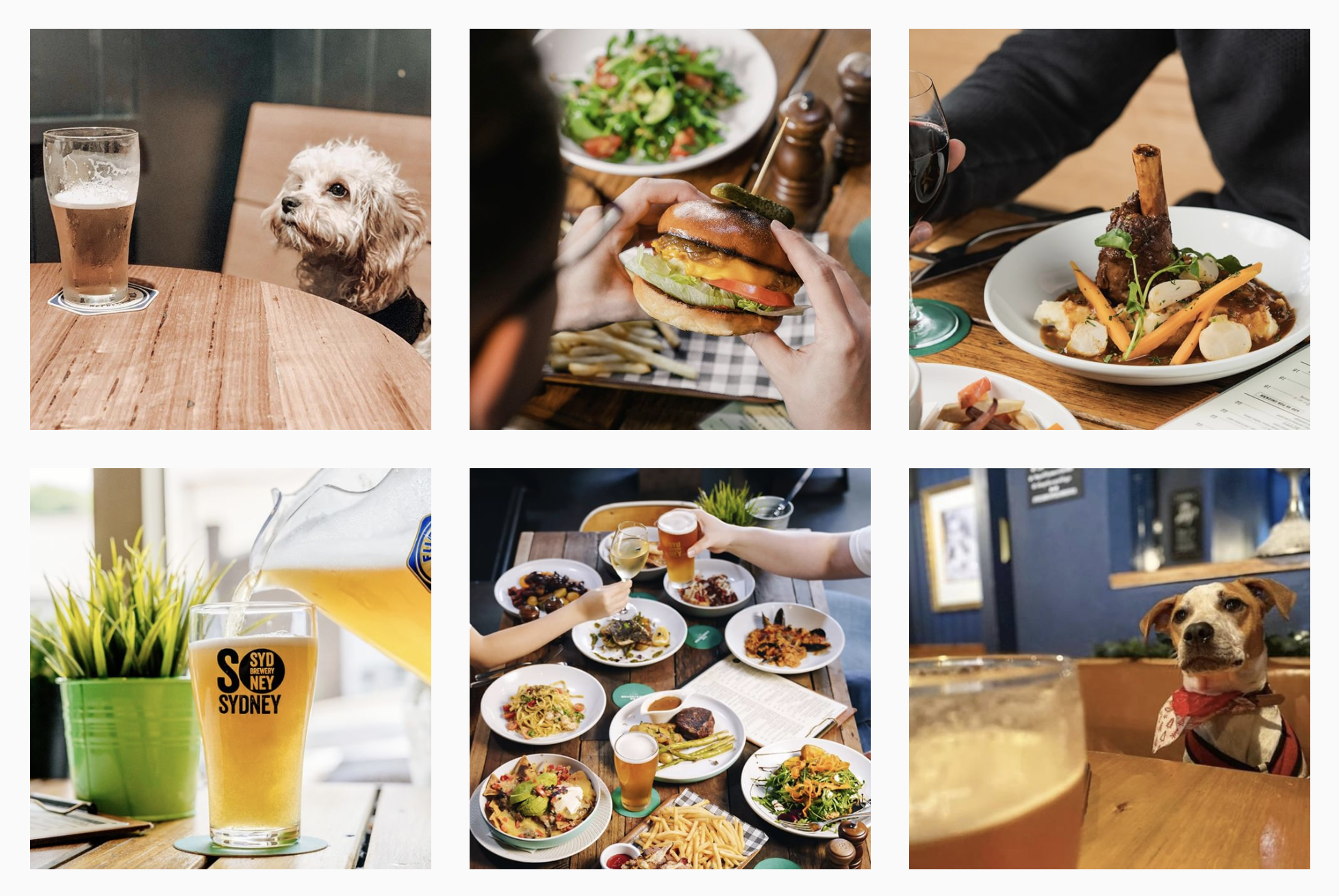 Instagram feed of The Carrington Sydney, showing photos of food, drinks and dogs in venue