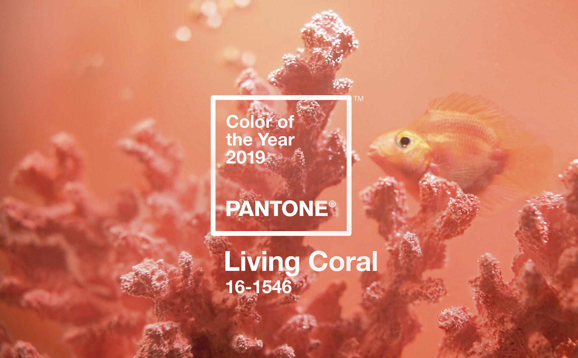 Image of goldfish and coral featuring the Pantone Colour of the Year Living Coral