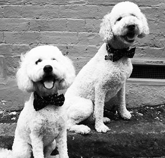 BD Woof & Finn